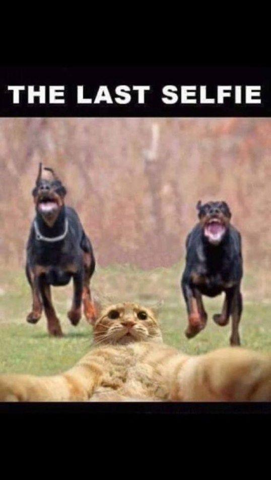 funny animal image