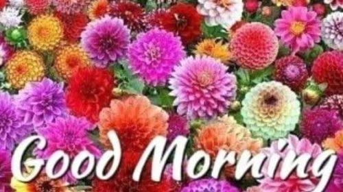 Good Morning Flower Images Download