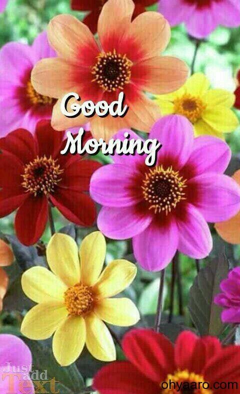 Good Morning Flower dp