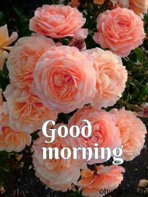 Good Morning Flower status