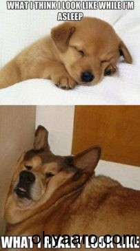 Funny Dogs Pics