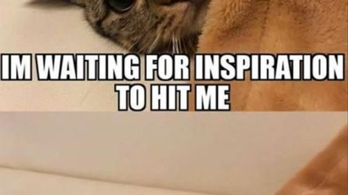 Funny Cat Pictures – Funny Animals Images
