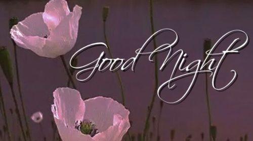 Good Night Flower Images – WhatsApp Status Image