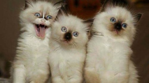 Latest Funny Cat Pictures