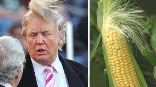 Donald Trump Funny Face