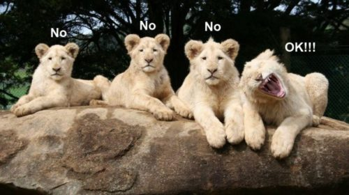 Funny Wild Animal Pictures