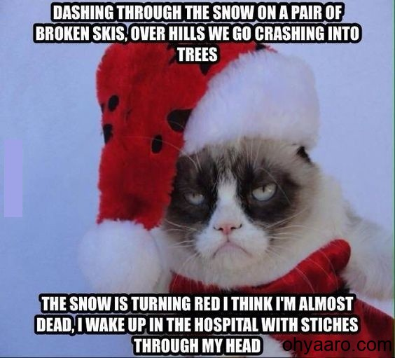 funny Christmas pictures Cat