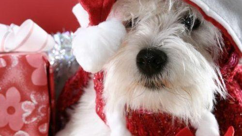 Christmas Dog Pic