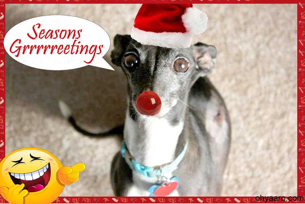 Funny Christmas Animal Pics