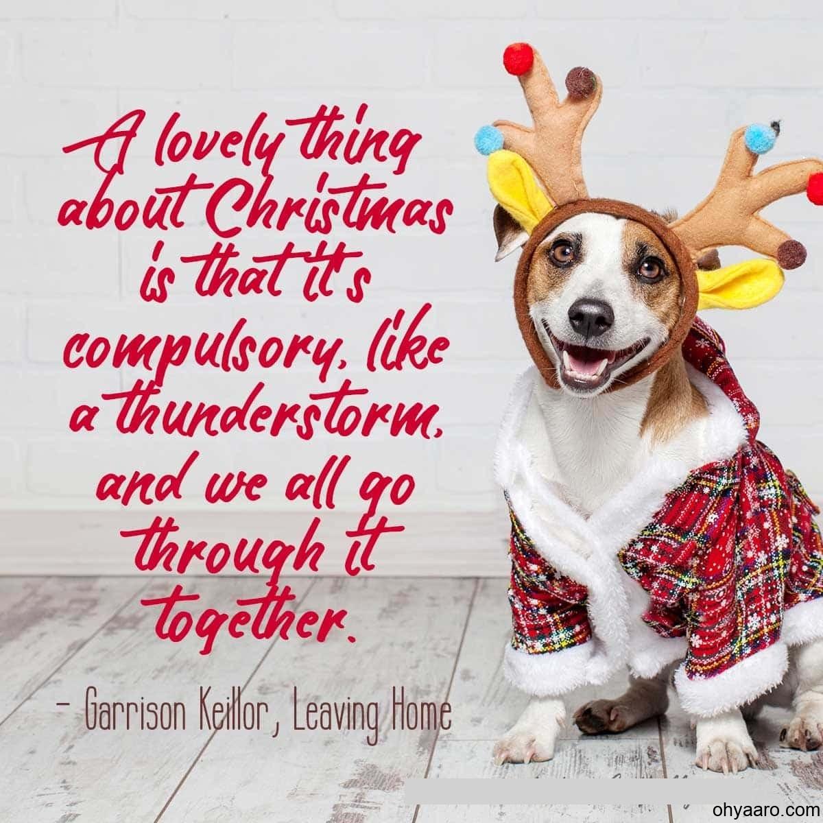 Funny Dog Image on Christmas Day
