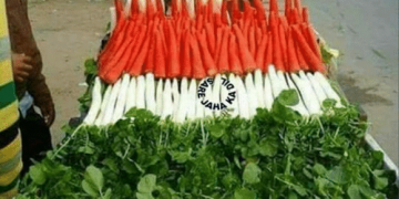 Republic Day Funny Images