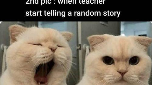memes on online classes