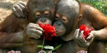 Happy Rose Day Funny Pics