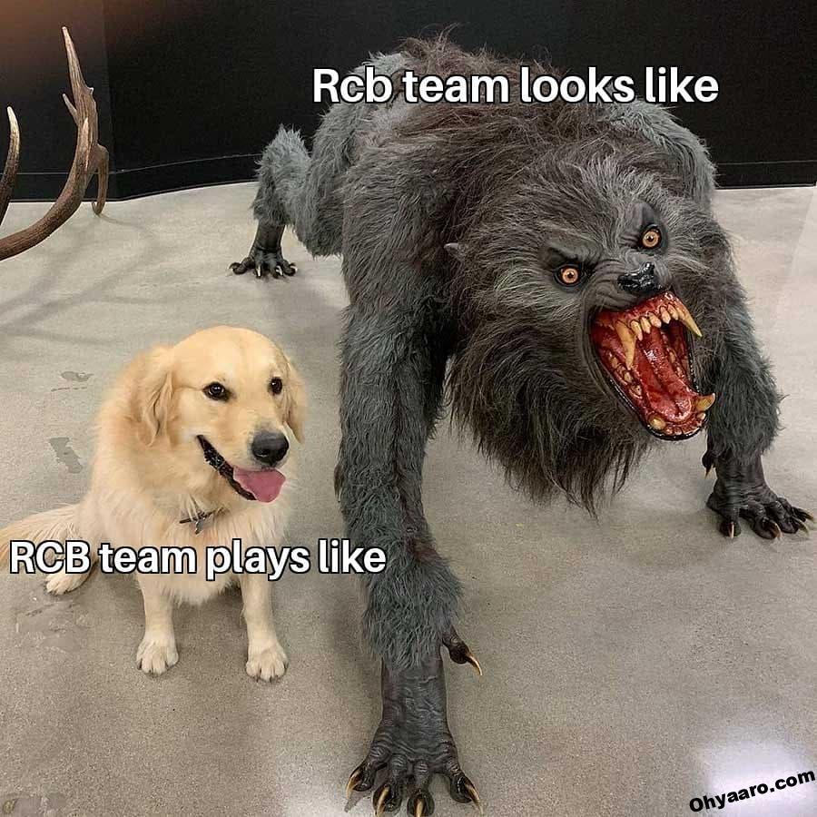 RCB Funny Meme