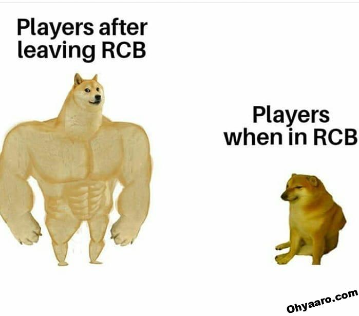 RCB Memes Download