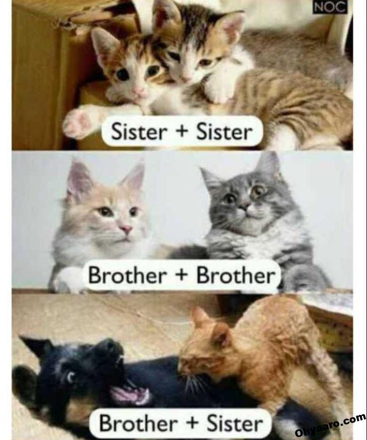 cat funny caption