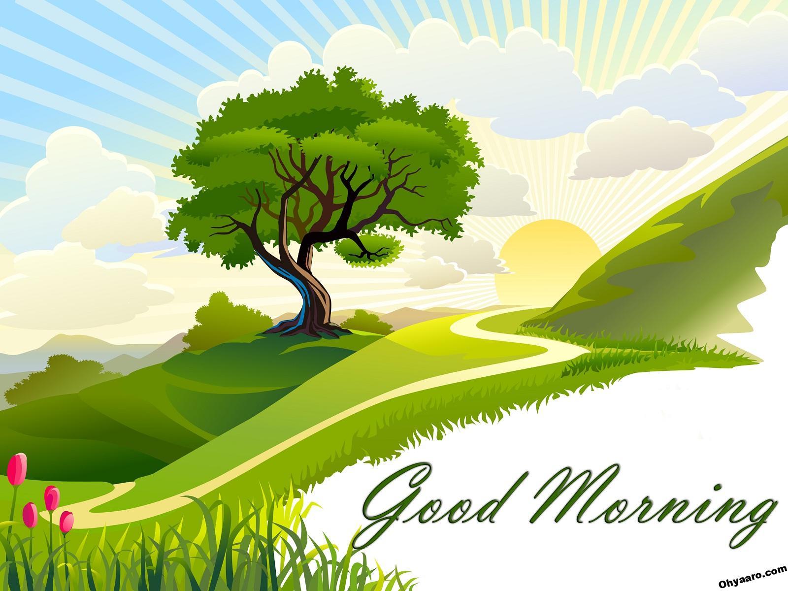 Beautiful Morning Nature Pics