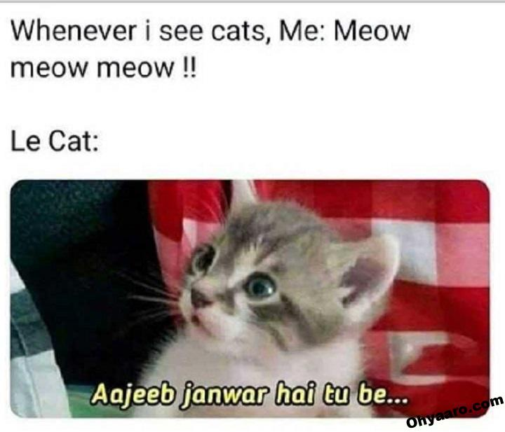 Cat Funny Memes for WhatsApp