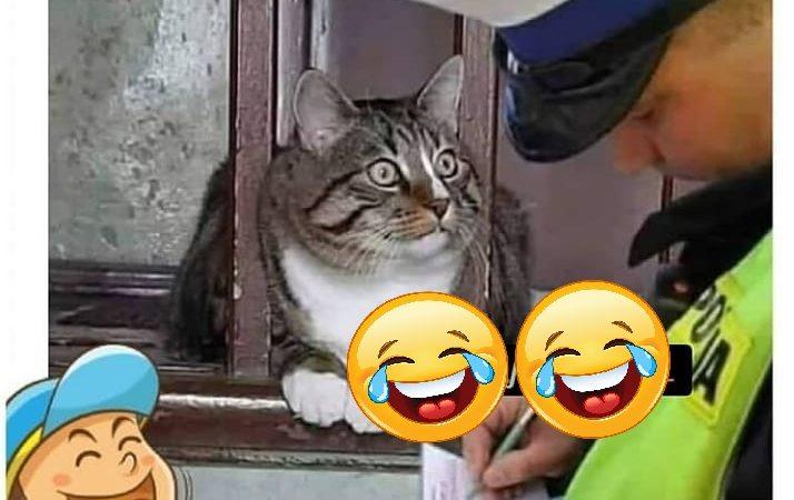 Cat Funny Memes for Facebook