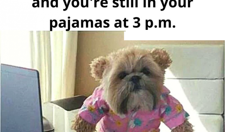 Work From Home Memes – Funny Memes Images