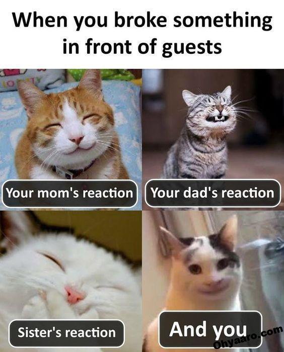 Download Funny Joke - Cat Funny Images